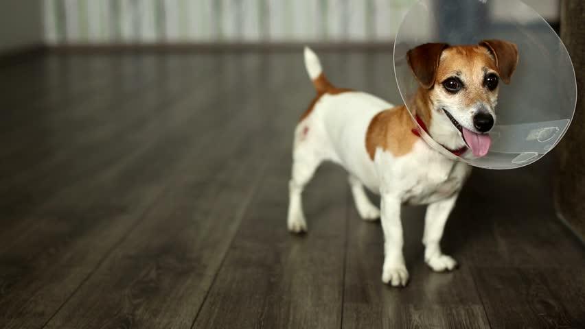 Pet Play Dog Collars