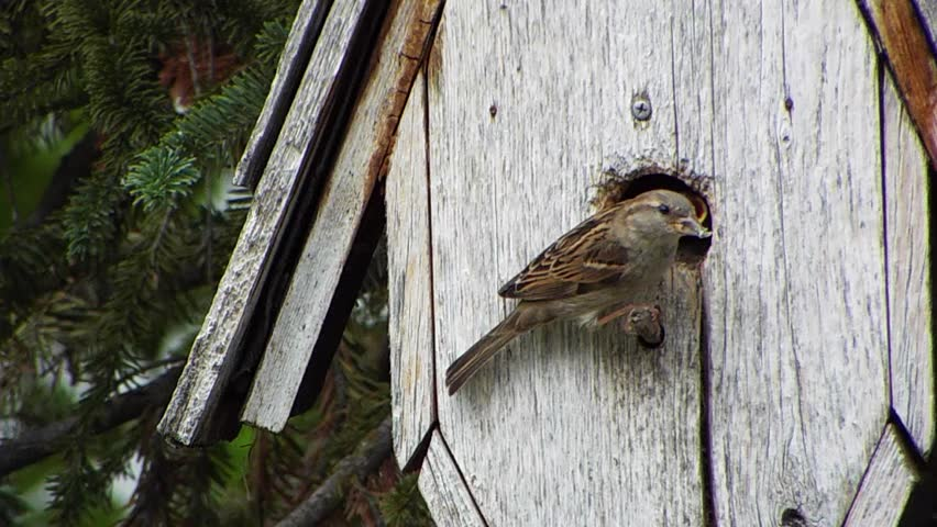 sparrow bush hindu single women This article relies largely or entirely on a single source ash's lark (mirafra ashi) or ash's bushlark is a species of lark in the family alaudidae endemic to.