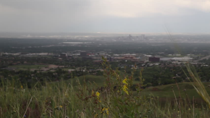 Tracking shot in a flower covered hill overlooking the city of Denver. - HD stock video clip