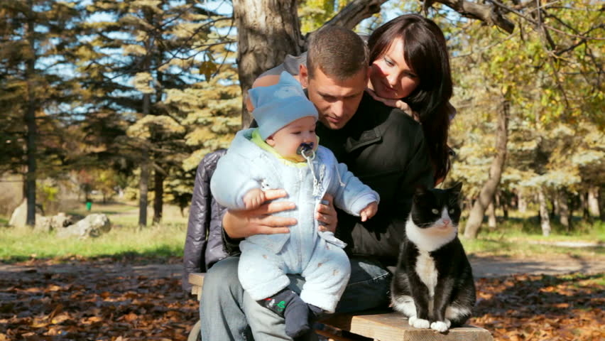 family with toddler looking at the cat - HD stock footage clip