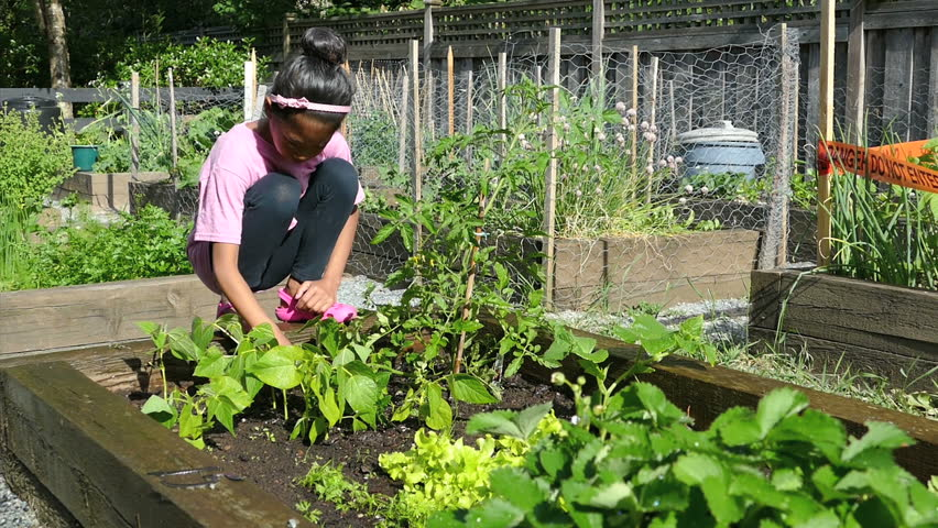 A cute little 9 year old asian girl enjoys tending to her new garden in the summer stock for Tending to the garden