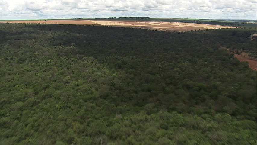 AERIAL Brazil-Approaching Harvesting, Minas Gerais State 2014 - HD stock video clip
