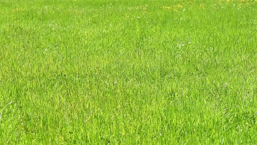 100+ 4k Grass Texture – yasminroohi