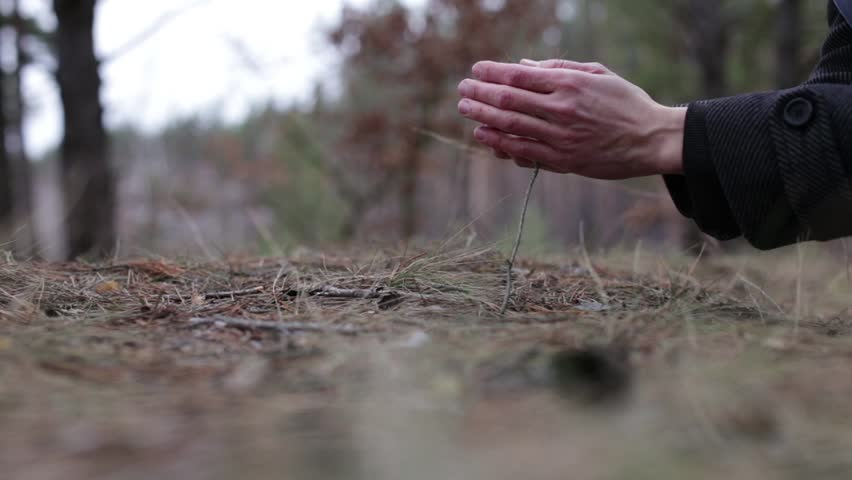 Human hand stroking a small sapling
