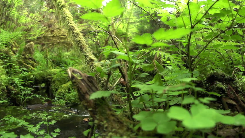 Dolly shot left movement with pull focus reveal stream in the rainforest