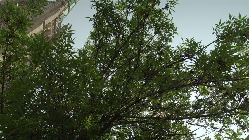 Establishing shot of a beautiful church in the city. 4K UHD. - 4K stock video clip