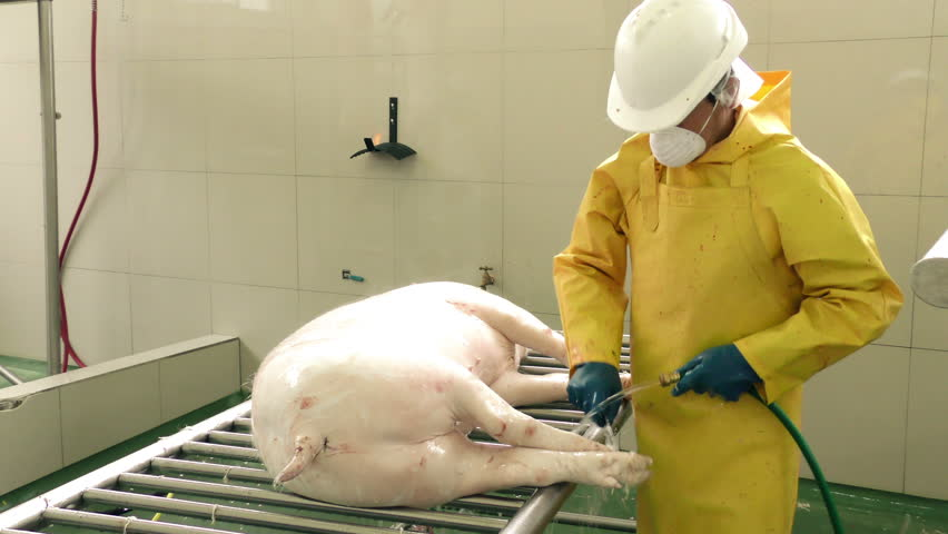 Manual dehairing using a knife by professional butcher inside of a slaughterhouse, static shot