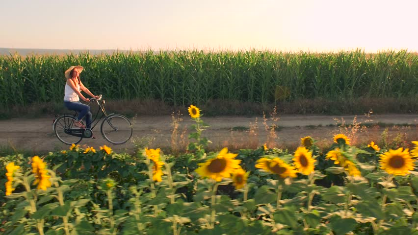 Beautiful Young Woman Riding Bike Bicycle Through Rural Path Sunflower Field Farm Life Ecology Farming Rural Environment Sunset Rays Summer Freedom Concept