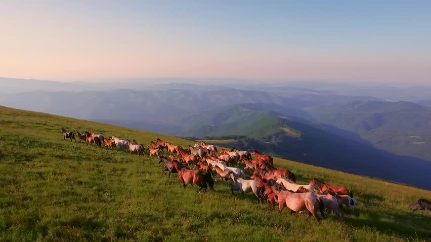 Aerial Of Horses Running Through Beautiful Sunny Mountain Meadow Spring Nature Animals Landscape Background Wild Nature Stallions Galloping Outdoor Livestock Concept