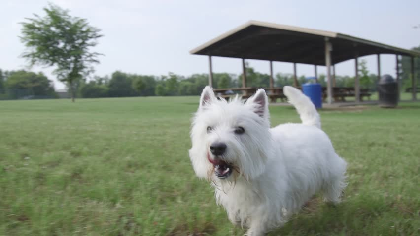 Dog playing in grass 11 - HD stock video clip