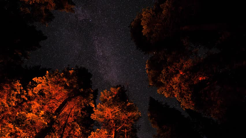 A beautiful time lapse of the milky way rotating through the night sky above the trees in the forrest