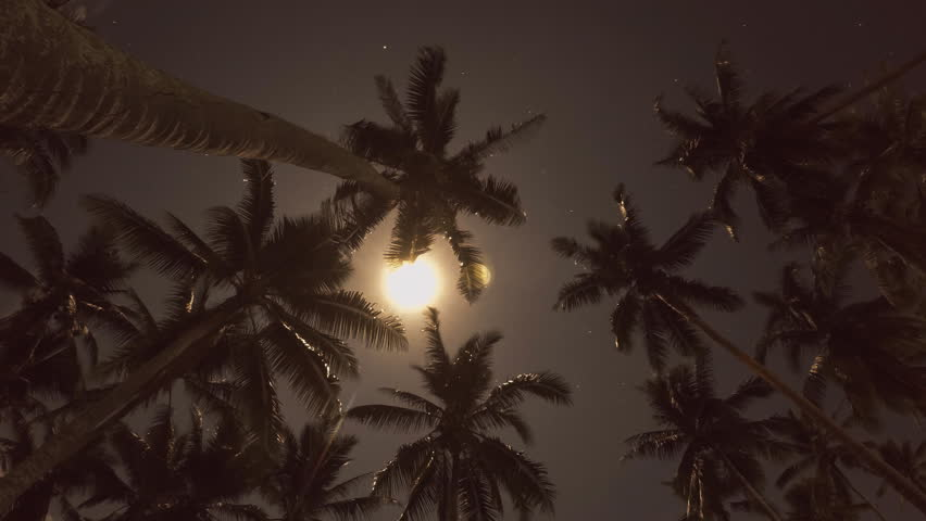 Night Sky With Stars And Moon Over Tropical Palm Trees ...