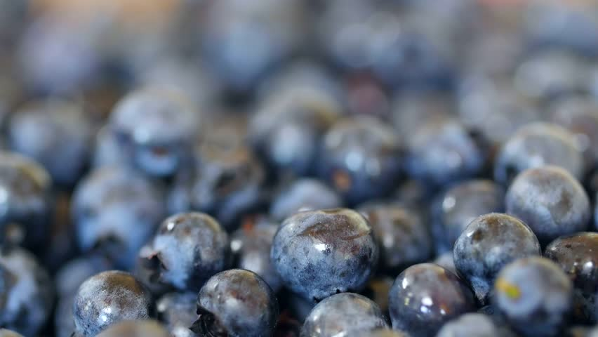 A dolly shot of fresh picked wild blueberries in a pile - 4K stock footage clip