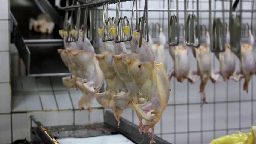 Food processing factory, chicken meat