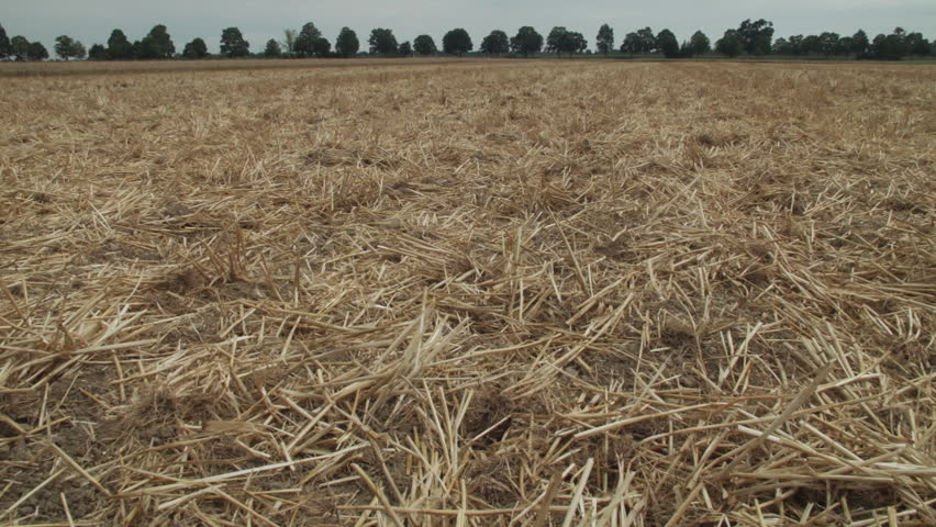 Mown down wheat field HD stock footage. A dolly shot of a Wheat field that has been chopped down leaving cut straw on the ground. ProRes.