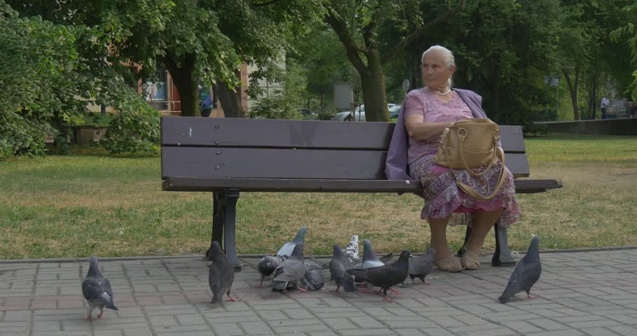 elderly man relaxing  bench  rose garden stock footage