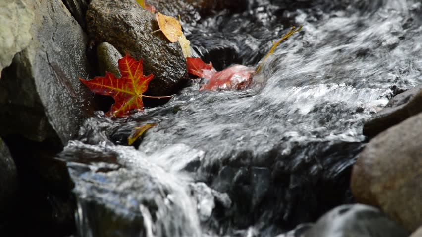 Autumn leaves submerged in rushing stream. - HD stock footage clip