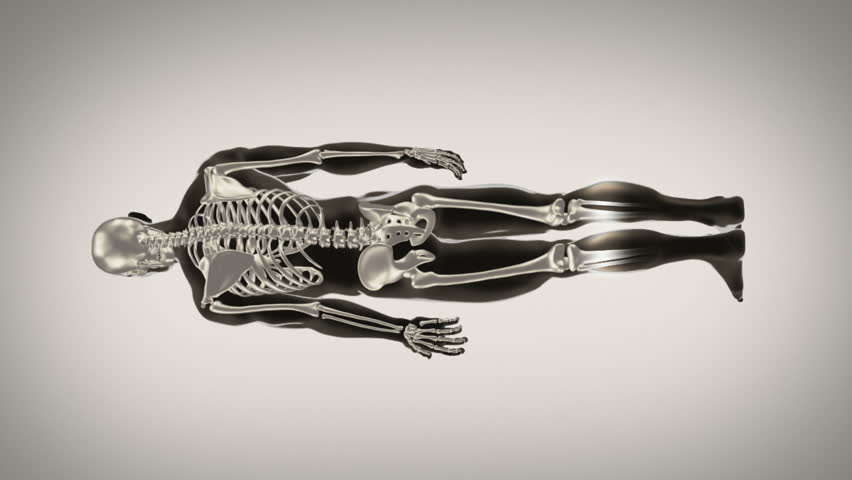 Full length human body. Scan. Loopable. Black and white. Grey background. Highly detailed human body and skeleton turning. More color options in my portfolio. - HD stock footage clip