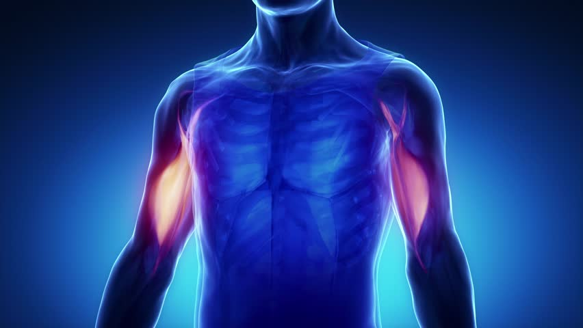 Biceps Tendon Rupture and Chiropractic