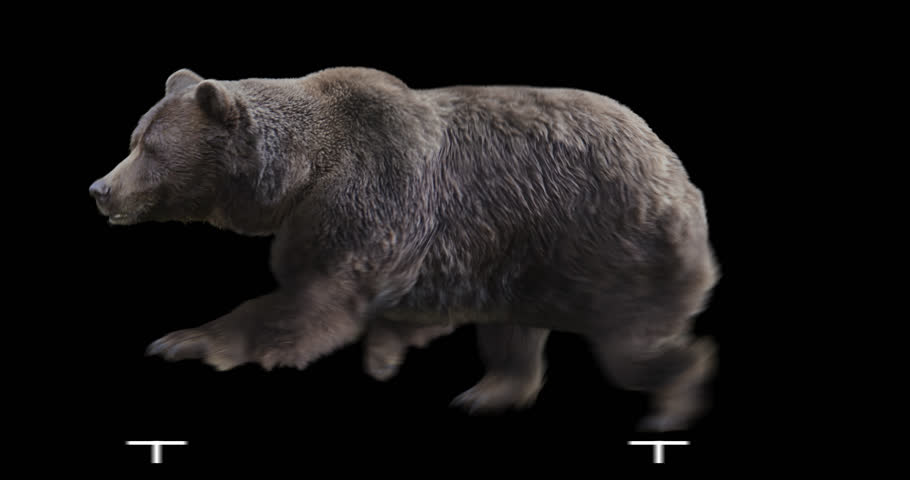 Isolated Brown Grizzly Bear cyclical running. Can be used in real coloring, and as a silhouette.