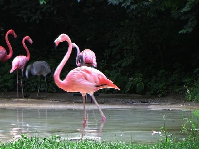 Flamingo Spinning Backwards