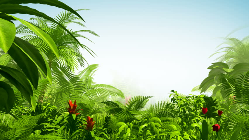 Growing tropical forest - HD stock video clip