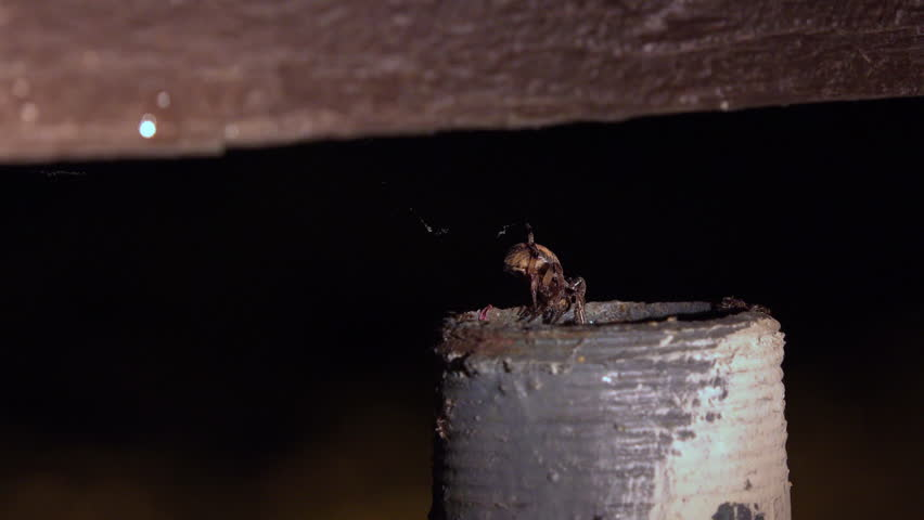 Spider crawls down into metal tube at night 4k | Shutterstock HD Video #12079391