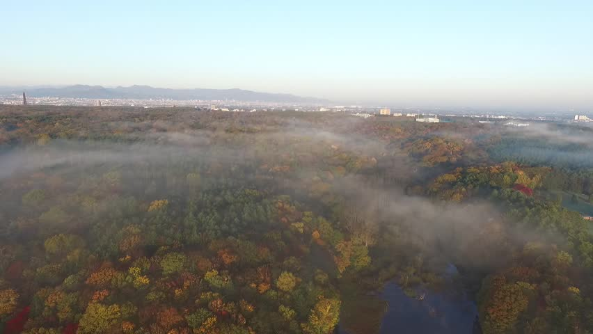 Aerial: the morning mist, surrounded by autumn leaves pond _5