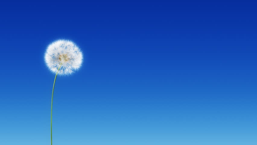 Dandelion Blue Gradient (with Matte). Dandelion on the wind. You can change background or add graphics to this clip, using attached luma matte.