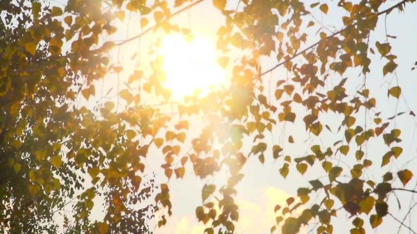 Autumn. The sun peeps through autumn birch leaves. High speed camera shot. Full HD 1080p. - HD stock video clip