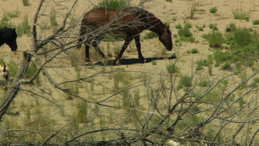 Aerial herd Wild horses Freedom Rangeland plains California USA | Shutterstock HD Video #12432623