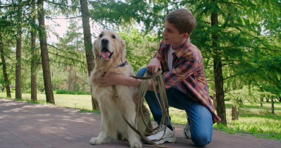 Teenage boy petting his lovely golden retriever and taking it for a walk  - 4K stock video clip
