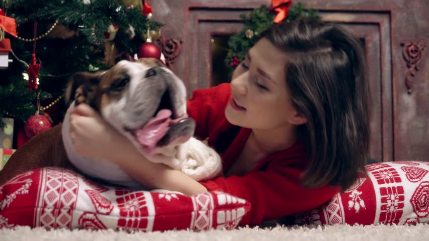 the lovely little bulldog and his hostess kiss at a New Year tree - 4K stock video clip