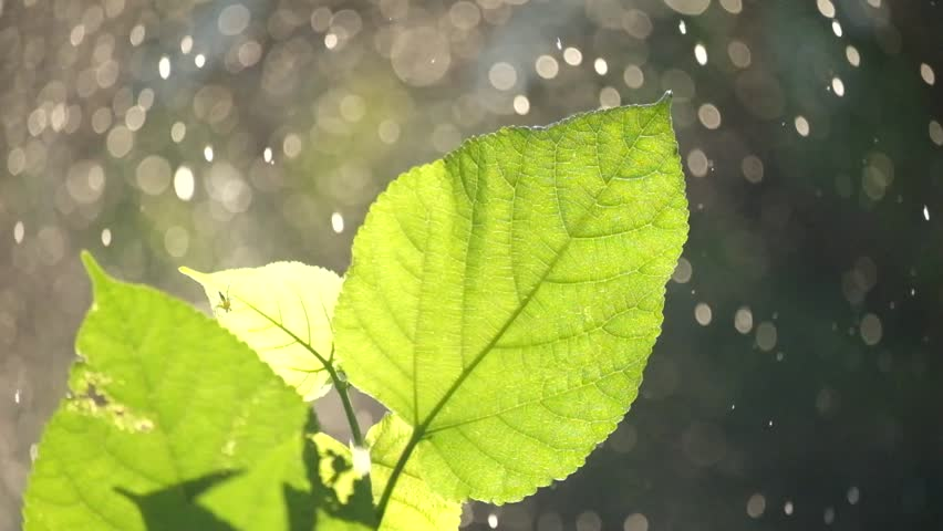 Defocused abstract nature background with green leaves and bokeh lights. | Shutterstock HD Video #12656480