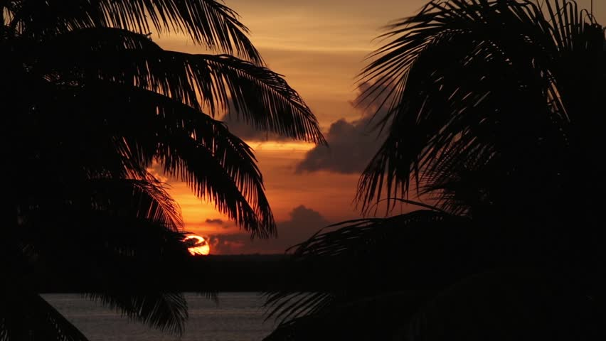 Sunset through palm tree leaf silhouette  | Shutterstock HD Video #12685820