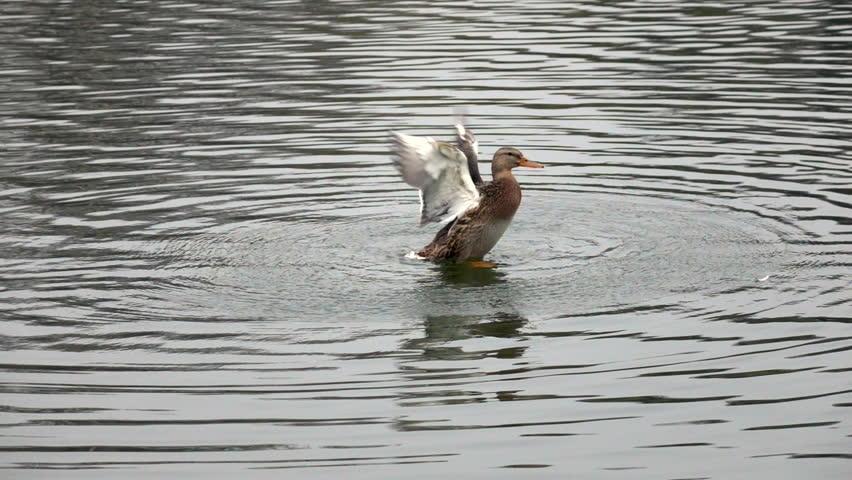 1920x1080 cabin lake ducks - photo #25