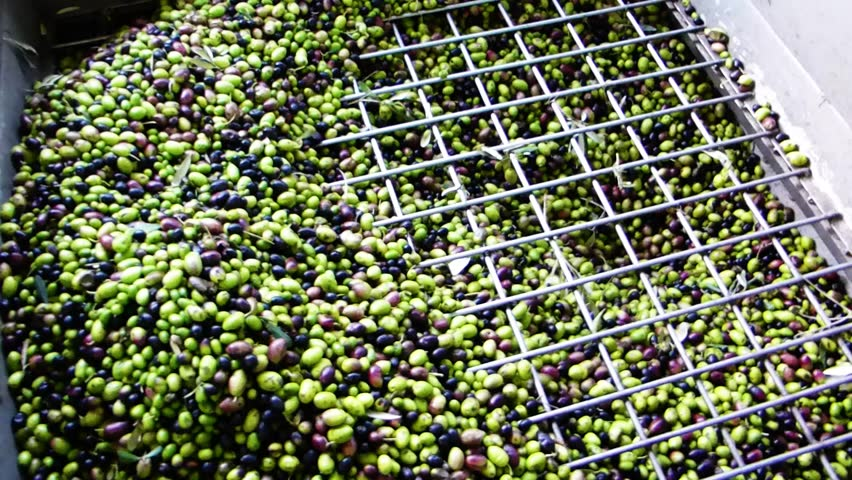 Mill during the olive oil extraction - HD stock video clip