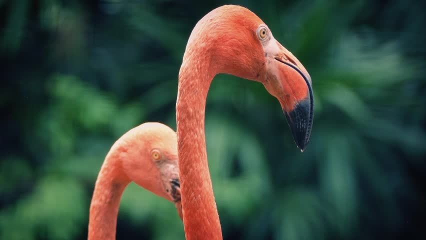 Flamingos In Tropical Landscape - HD stock footage clip