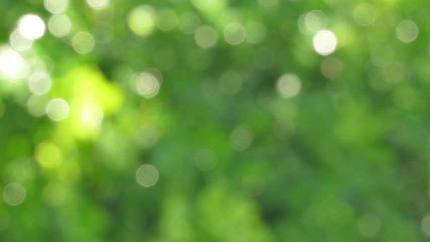 Defocused abstract nature background with green leaves and bokeh lights, 4k - 4K stock footage clip