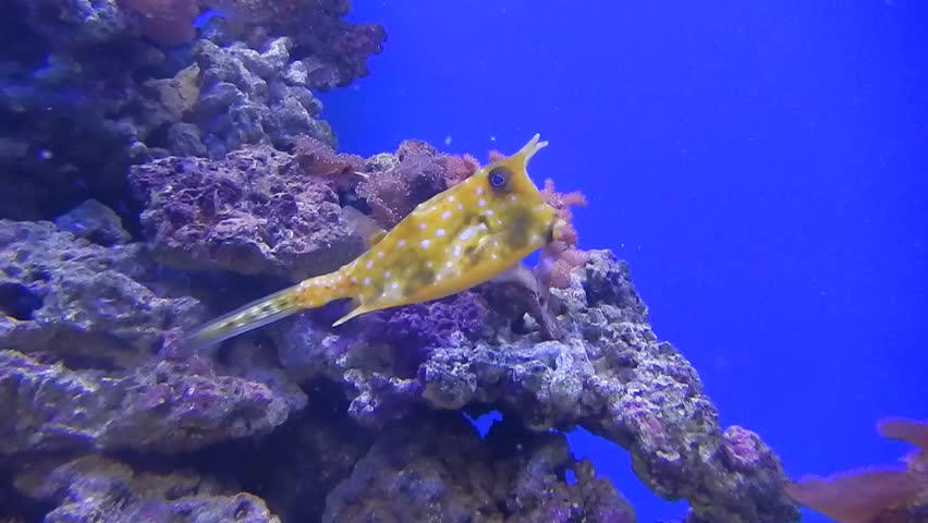 Coral Reef And Tropical Fish   Shutterstock HD Video #12898238