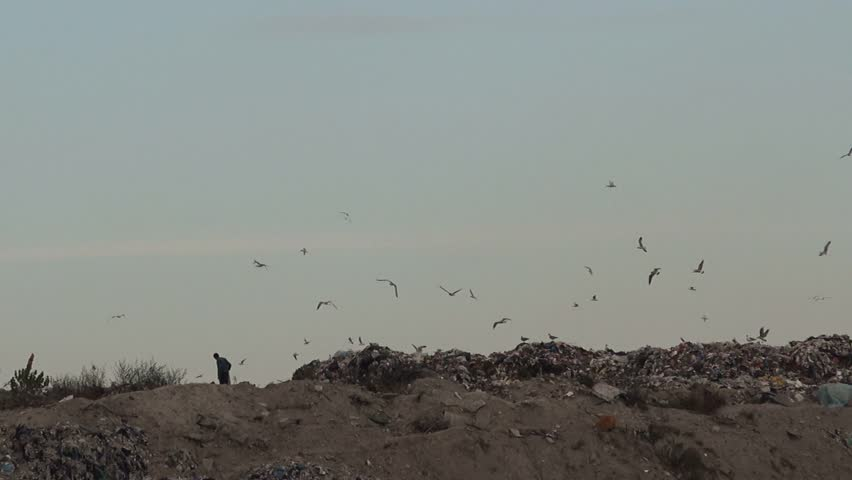 Unrecognizable person on landfill garbage dump, flock of gulls flying over his head.