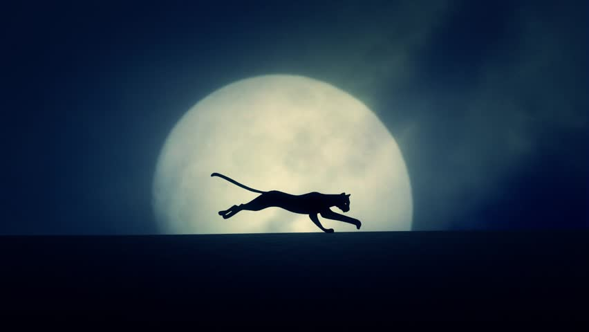 Cat Running on a Rising Full Moon Background | Shutterstock HD Video #12964649