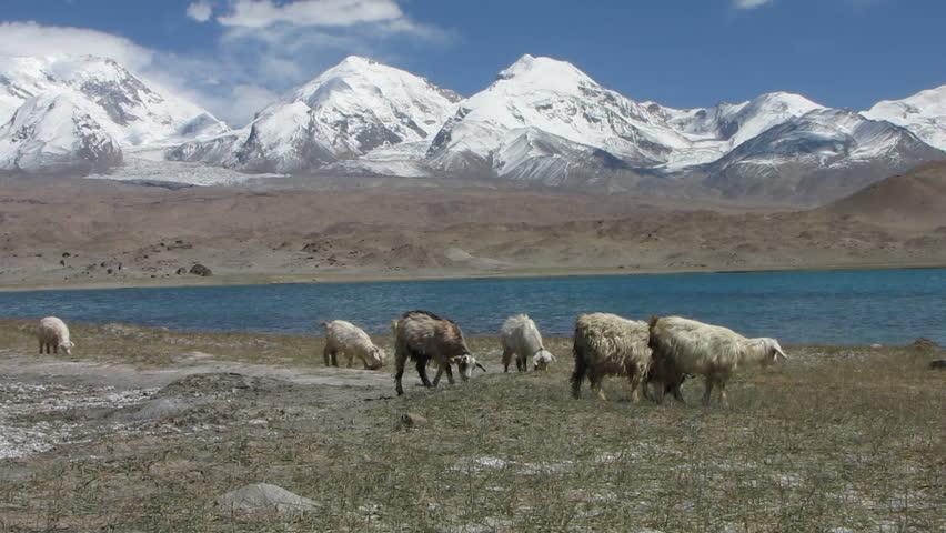 Blue Glacier Management Group 26