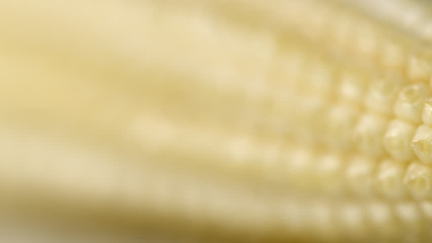 Baby sweet corn true macro HD stock footage. A baby sweet corn in true macro close up with a sliding camera move and selective focus.