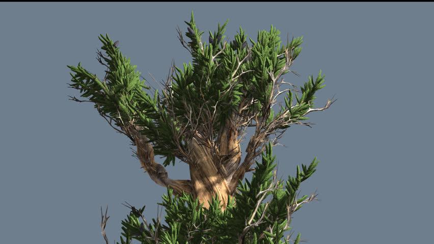 top pin tree of - photo #29