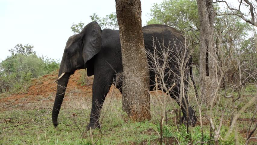 Girl climbs a tree stock footage video 9127853 shutterstock - Elephant assis ...