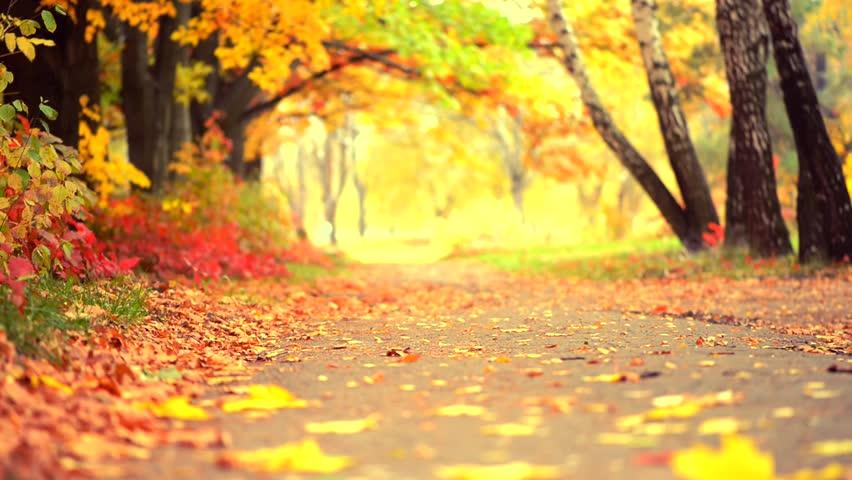 Autumn Park Background Fall Beautiful Nature Scene Of