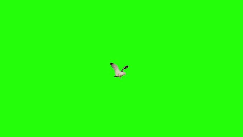 Ultra slow motion of a sea gull landing in the middle of frame and flying away. Shot 100 fps with red dragon camera. Version 2   Shutterstock HD Video #13548146