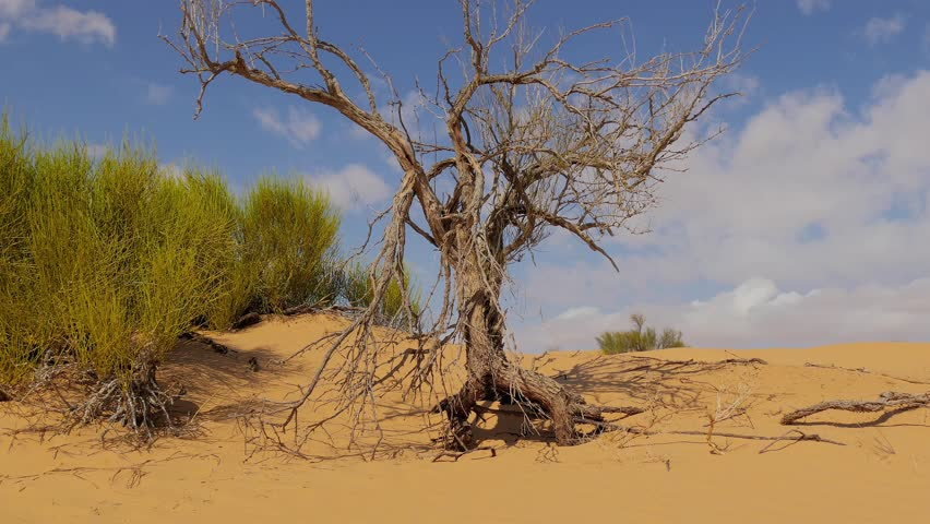 Time-lapse Cloud Over Petrified Tree In Barren ...