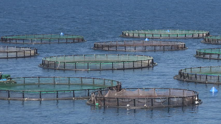 Sea fish farm hatchery fishing greece aquaculture for Illinois fish farms